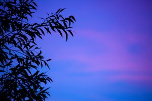 _absolutely_free_photos_original_photos_blue-leaf-silhouette-5616x3744_12648